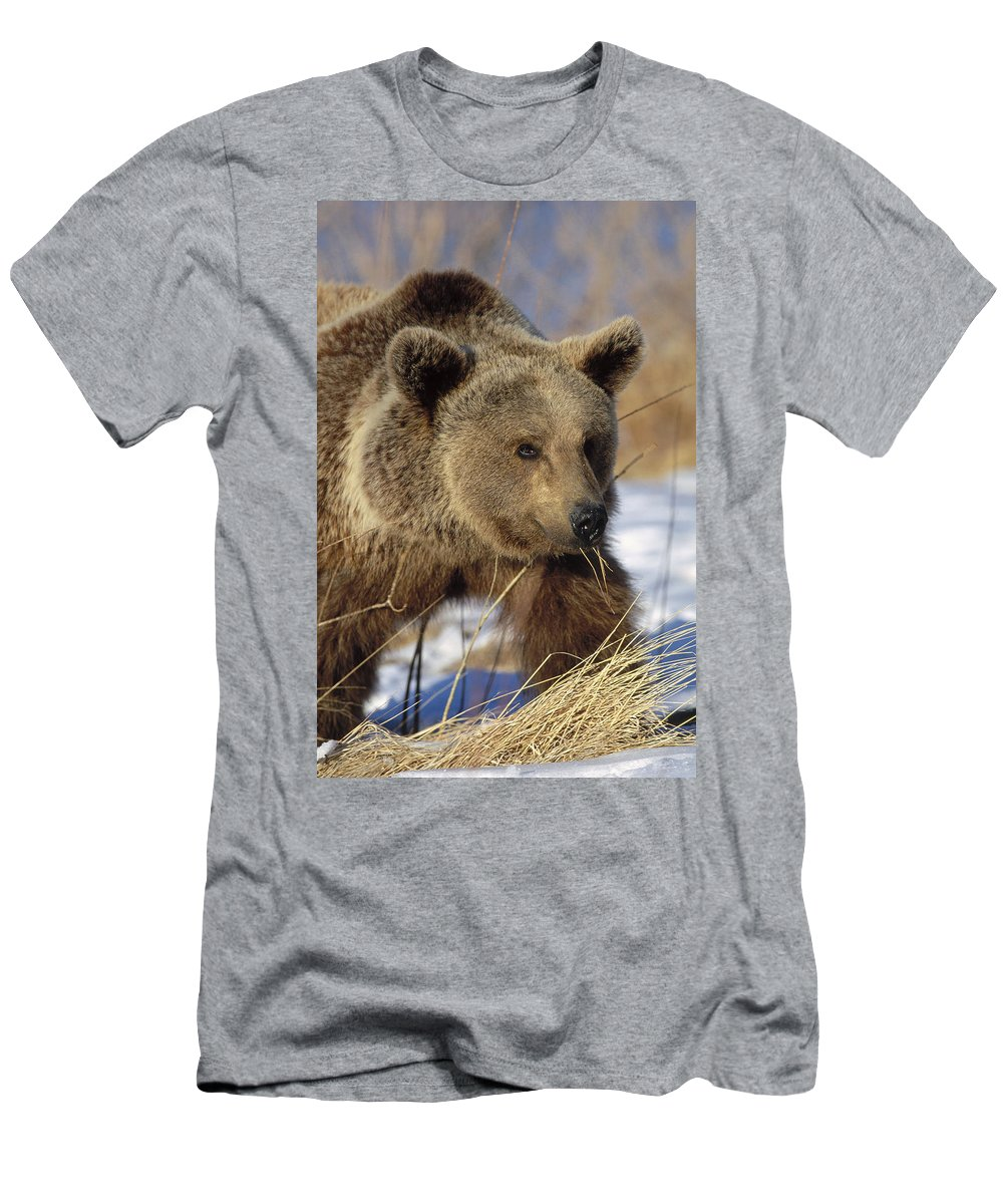 Feb0514 Men's T-Shirt (Athletic Fit) featuring the photograph Brown Bear Eating Dry Grasses by Konrad Wothe