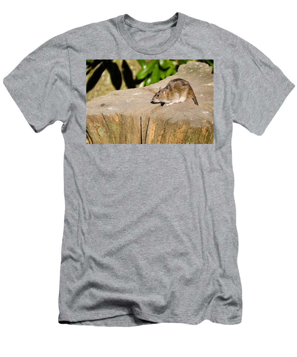 Animal Men's T-Shirt (Athletic Fit) featuring the photograph Brown Rat On Log by David Head