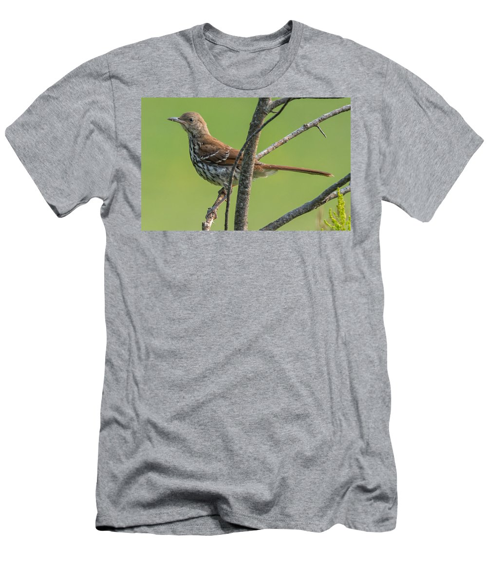 Bird Men's T-Shirt (Athletic Fit) featuring the photograph Brown Thrasher by Richard Kitchen