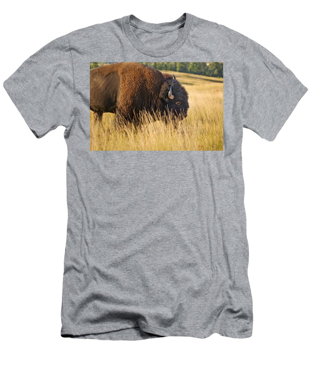 Buffalo Men's T-Shirt (Athletic Fit) featuring the photograph Buff by Rich Franco