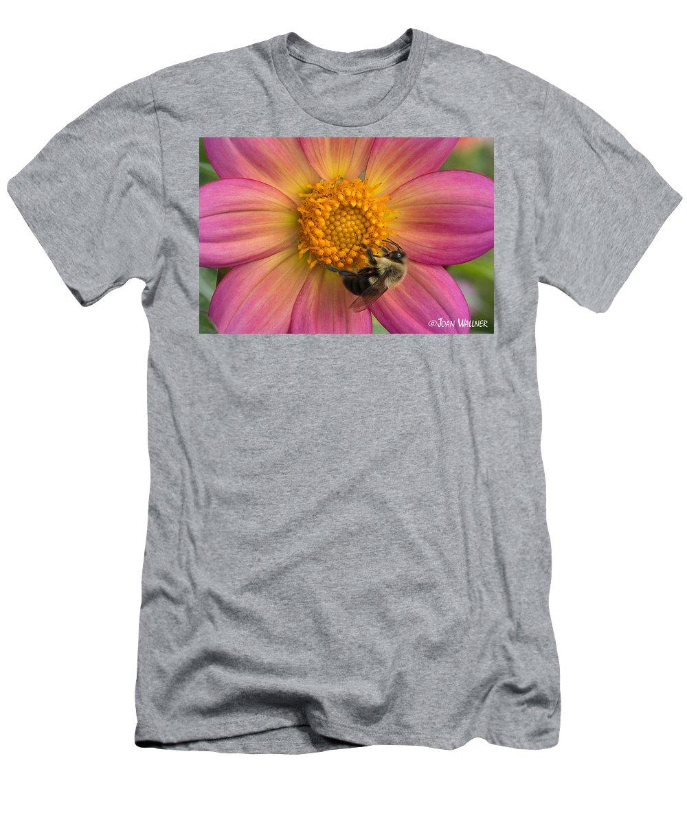 Minnesota Landscape Arboretum Men's T-Shirt (Athletic Fit) featuring the photograph Bumble Bee Dahlia by Joan Wallner
