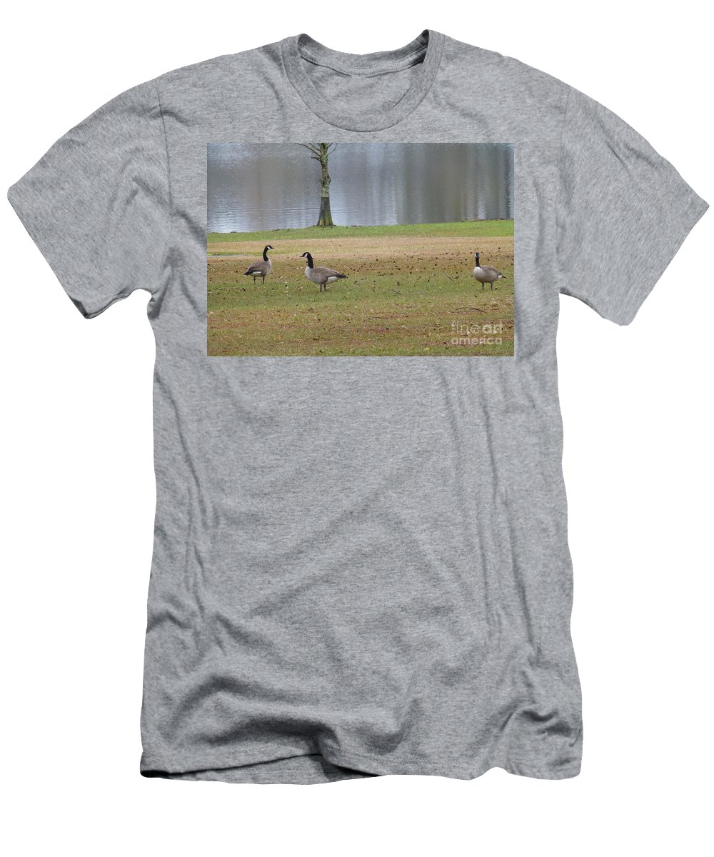 Tree Men's T-Shirt (Athletic Fit) featuring the photograph Canadian Geese Tourists by Joseph Baril