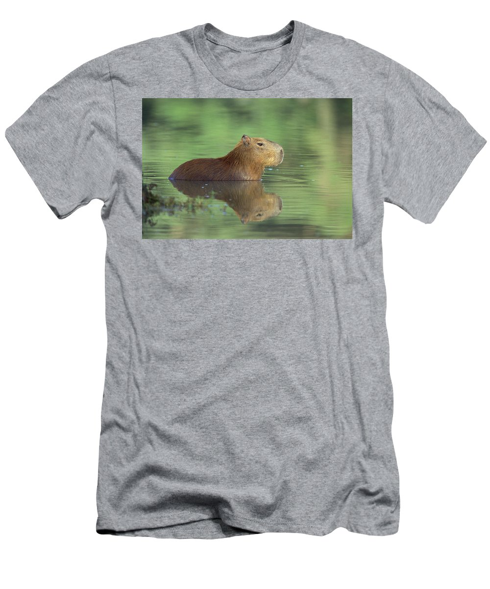 Feb0514 Men's T-Shirt (Athletic Fit) featuring the photograph Capybara Wading Pantanal Brazil by Konrad Wothe