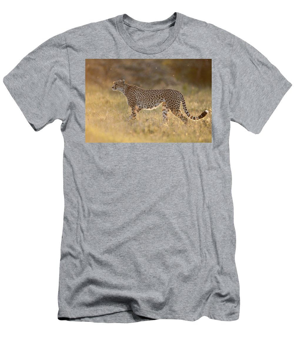 Feb0514 Men's T-Shirt (Athletic Fit) featuring the photograph Cheetah In Grassland Kenya by Tui De Roy