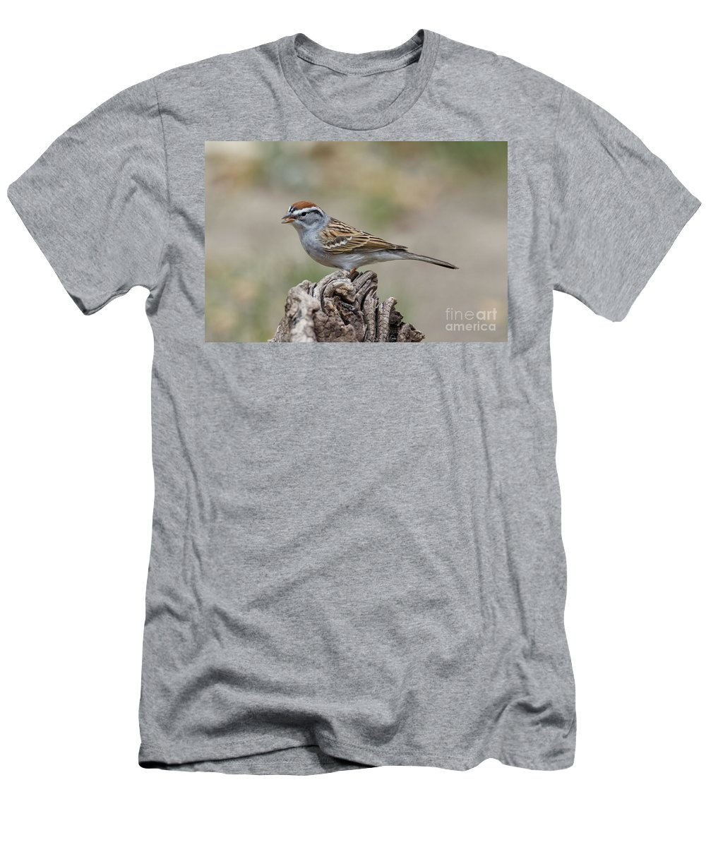 Chipping Sparrow Men's T-Shirt (Athletic Fit) featuring the photograph Chipping Sparrow by Anthony Mercieca