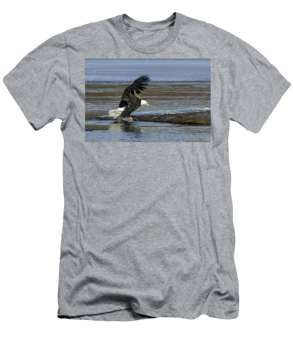 Eagle Men's T-Shirt (Athletic Fit) featuring the photograph Close To Lunch Time by Steven Clair
