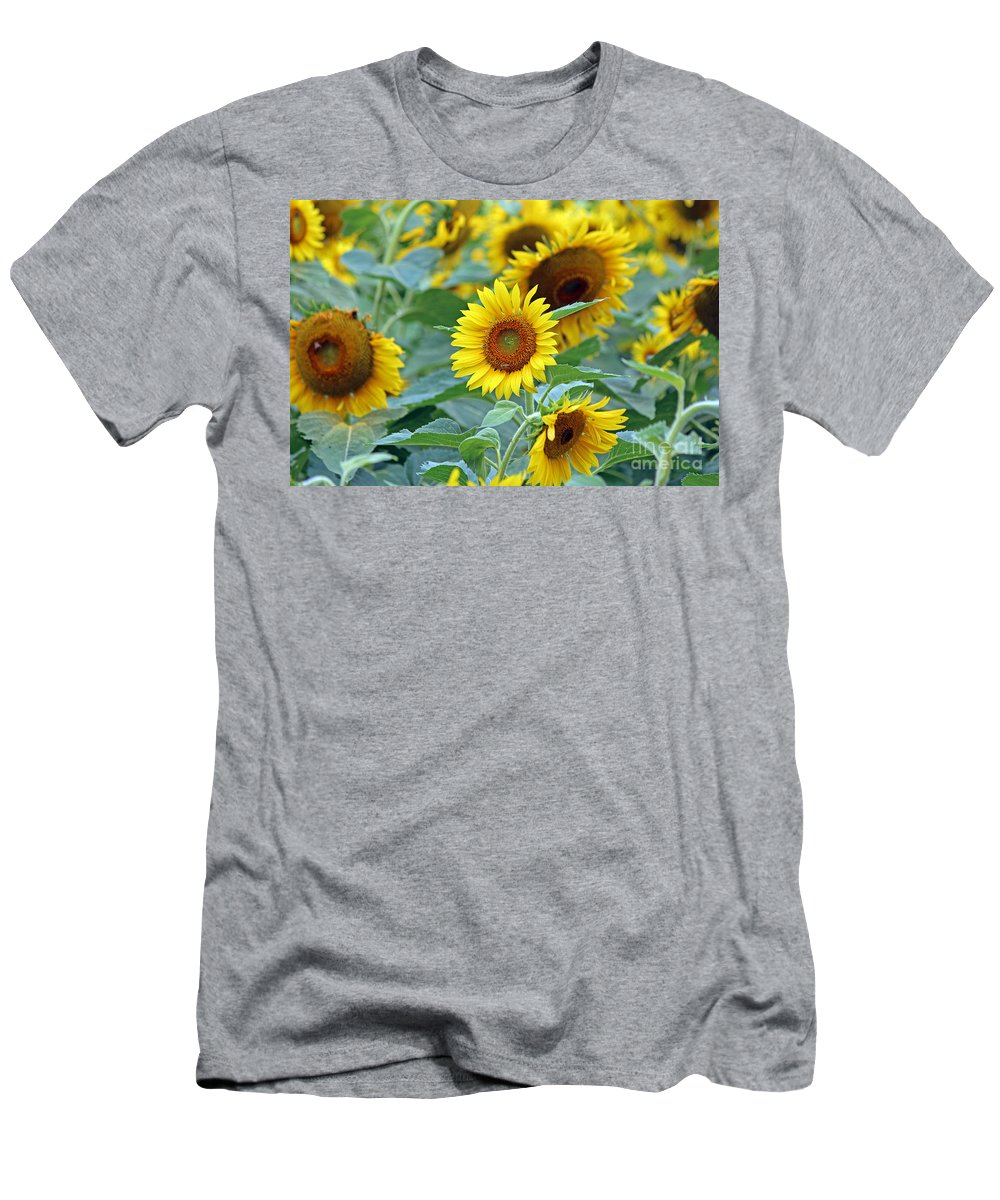 Sunflower Men's T-Shirt (Athletic Fit) featuring the photograph Cream Of The Crop by Jamie Smith