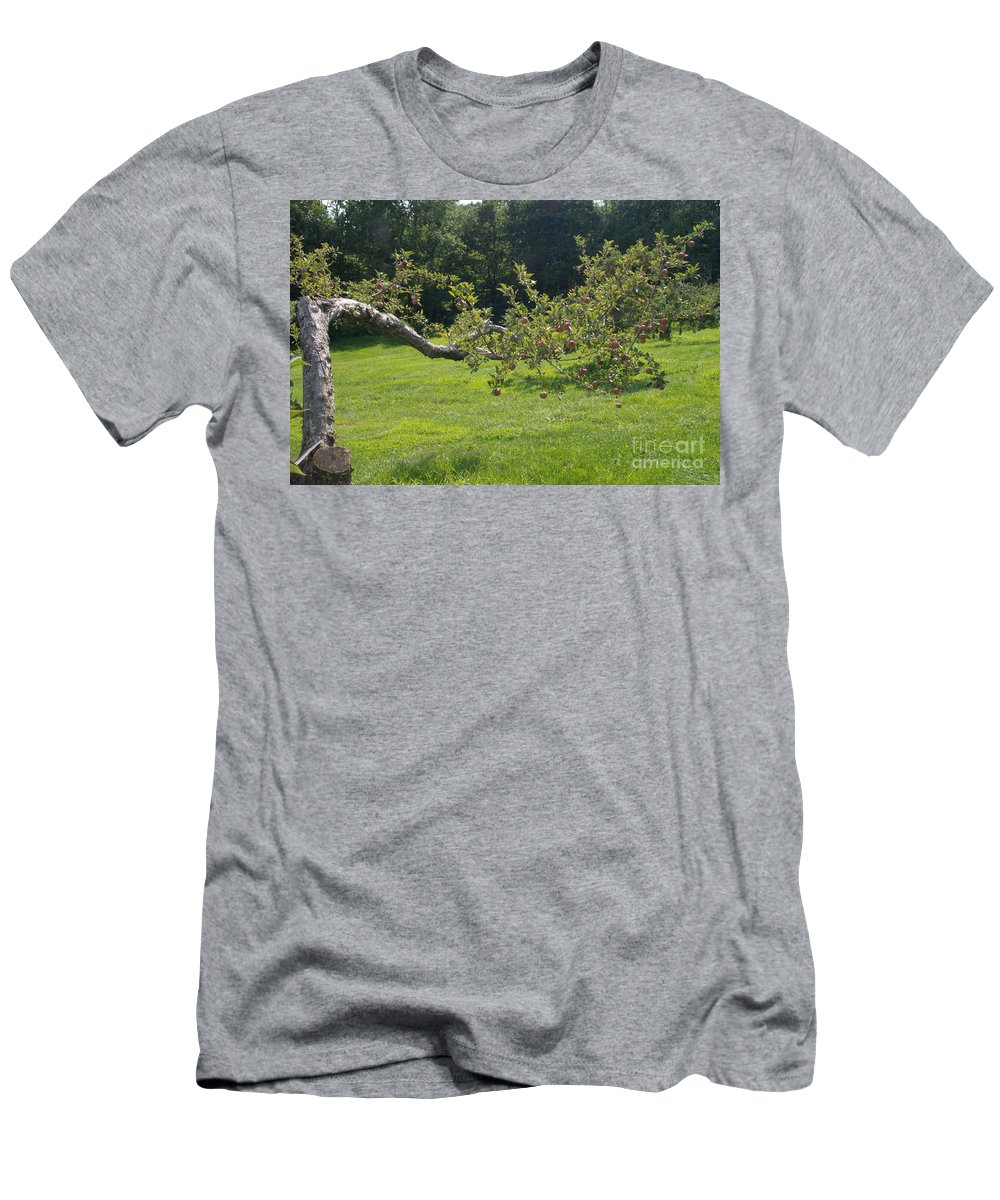 Orchard Men's T-Shirt (Athletic Fit) featuring the photograph Crooked Apple Tree by Ray Konopaske