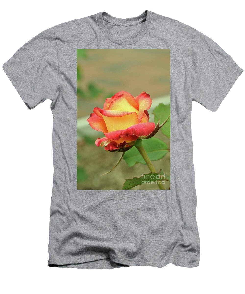 Delaney Sisters Hybrid Men's T-Shirt (Athletic Fit) featuring the photograph Delaney Sisters Grandiflora Rose 2 by Allen Beatty
