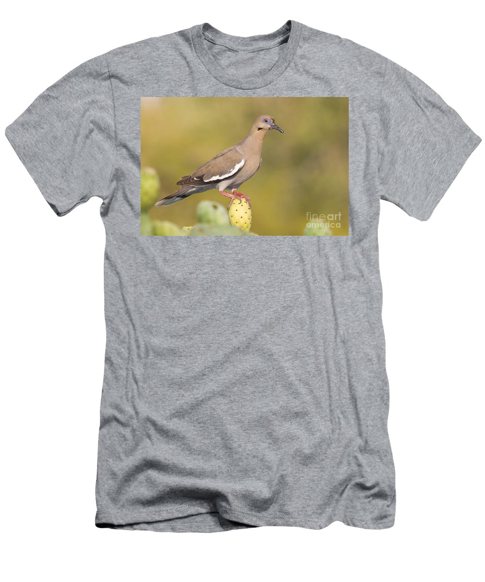 Birding Men's T-Shirt (Athletic Fit) featuring the photograph Dove On A Cactus Bud by Bryan Keil