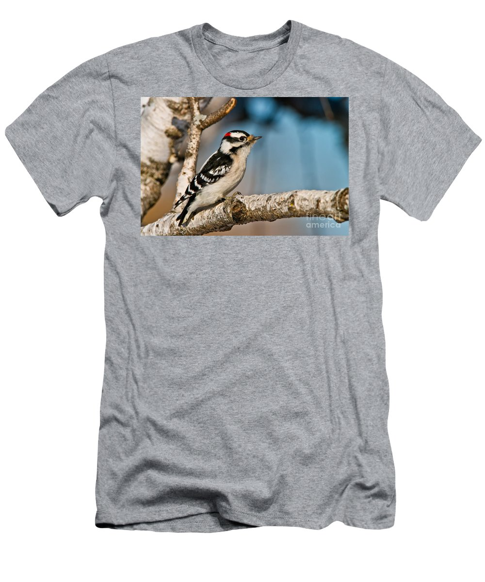 Downy Woodpecker Men's T-Shirt (Athletic Fit) featuring the photograph Downy Woodpecker Pictures 34 by World Wildlife Photography