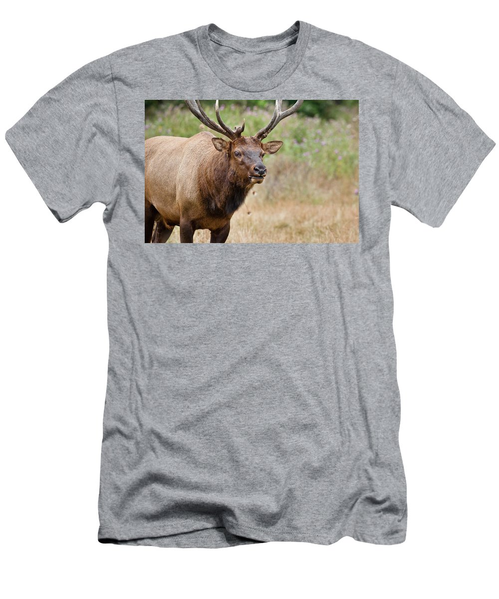 Roosevelt Elk Men's T-Shirt (Athletic Fit) featuring the photograph Elk Staring by Greg Nyquist