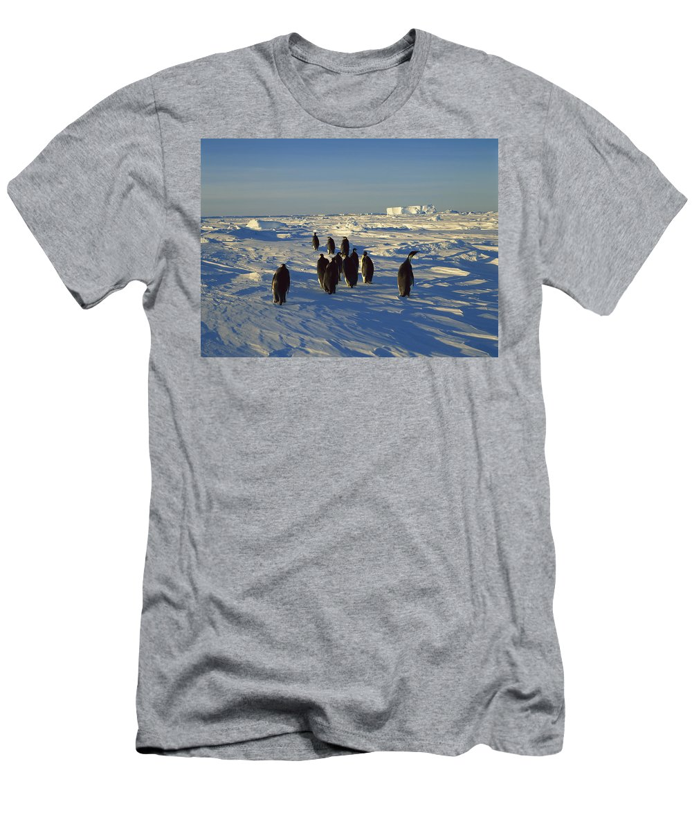 Feb0514 Men's T-Shirt (Athletic Fit) featuring the photograph Emperor Penguin Group Walking On Ice by Konrad Wothe
