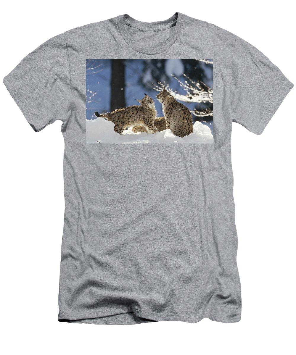Feb0514 Men's T-Shirt (Athletic Fit) featuring the photograph Eurasian Lynx Pair Bayerischer Wald Np by Konrad Wothe