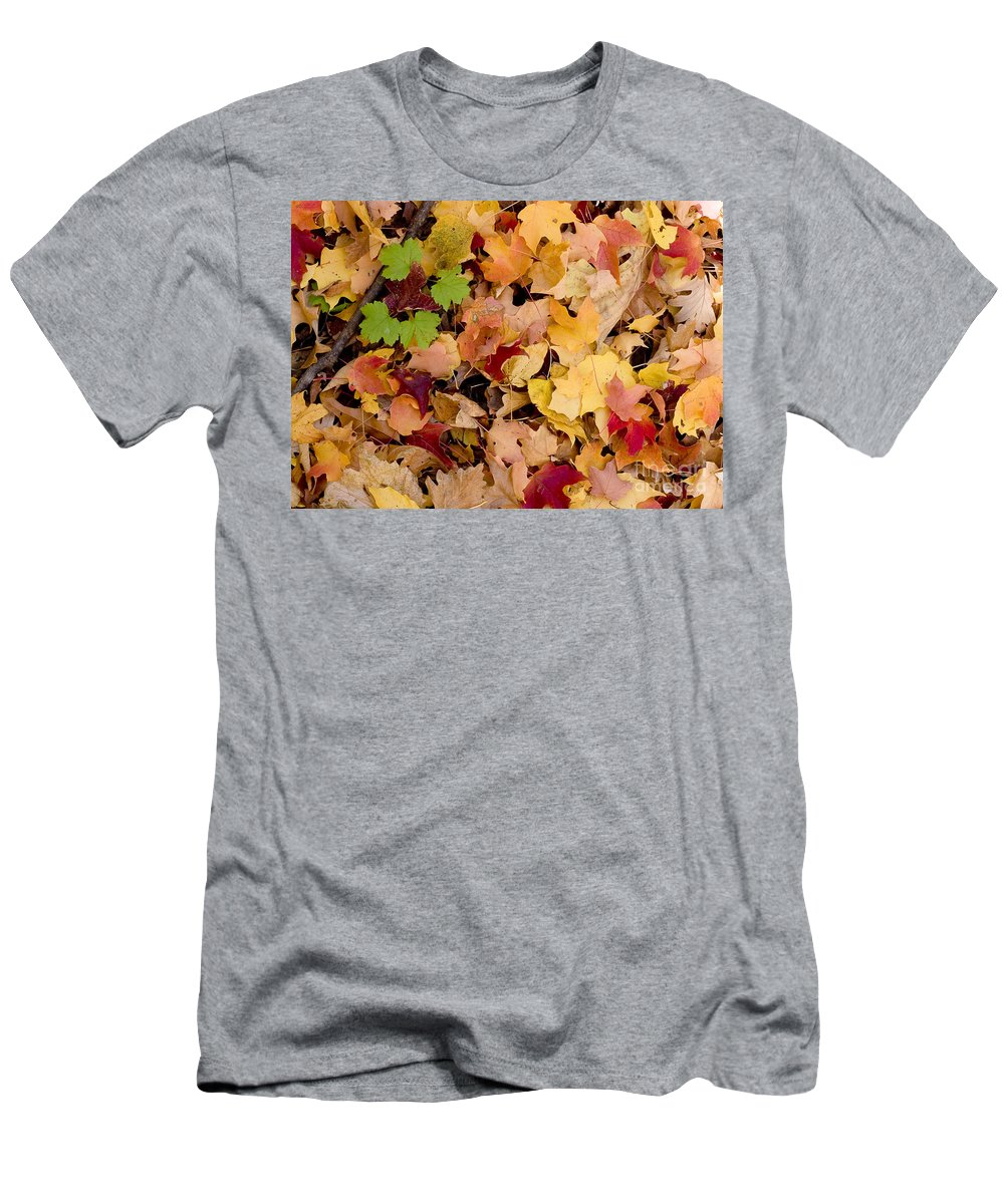 Arboretum Men's T-Shirt (Athletic Fit) featuring the photograph Fall Maples by Steven Ralser