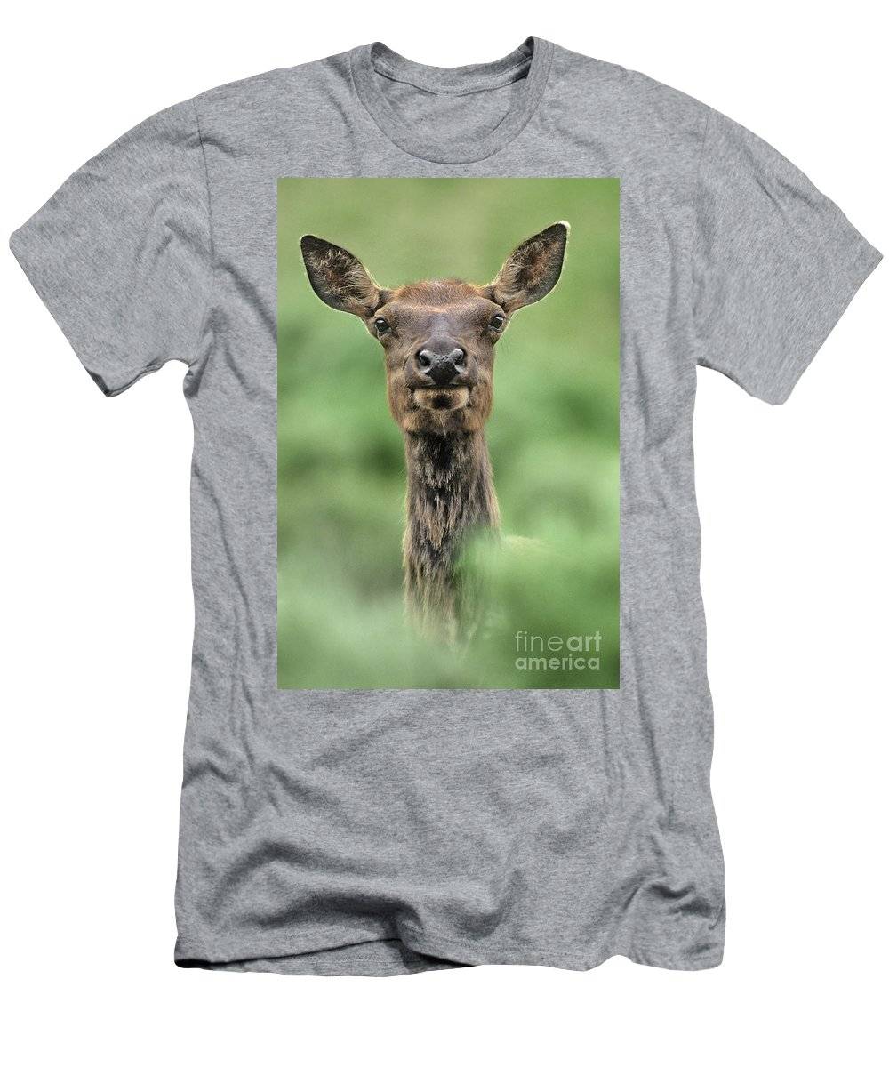 North America Men's T-Shirt (Athletic Fit) featuring the photograph Female Elk Portrait Yellowstone National Park Wyoming by Dave Welling
