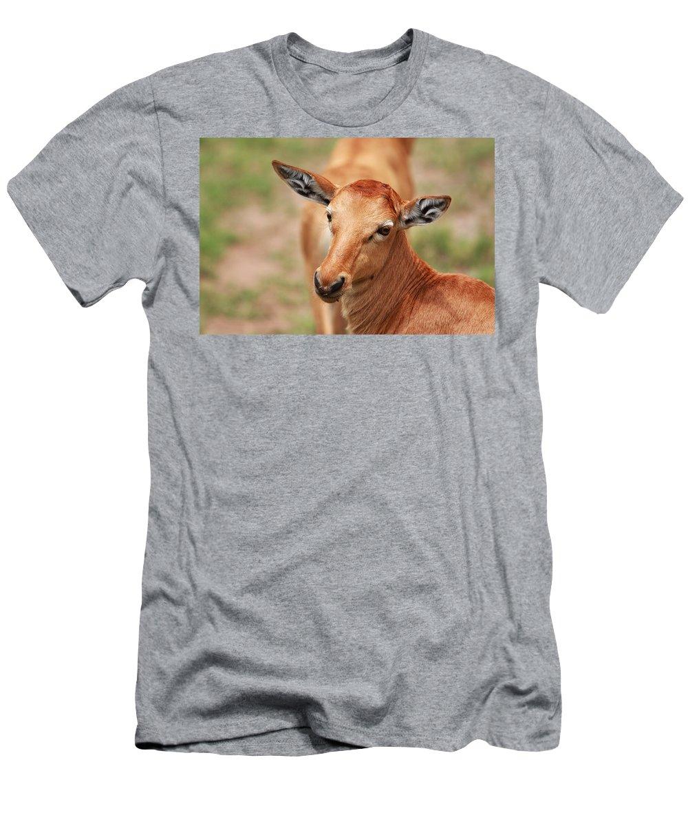 Deer Men's T-Shirt (Athletic Fit) featuring the photograph Female Impala by Aidan Moran