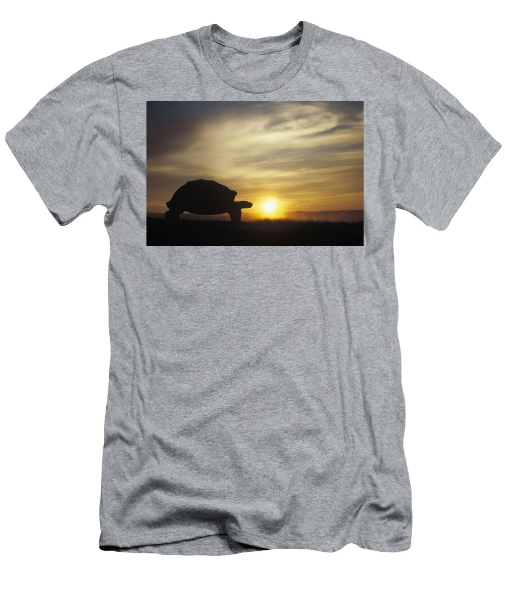 Feb0514 Men's T-Shirt (Athletic Fit) featuring the photograph Galapagos Giant Tortoise At Sunrise by Tui De Roy