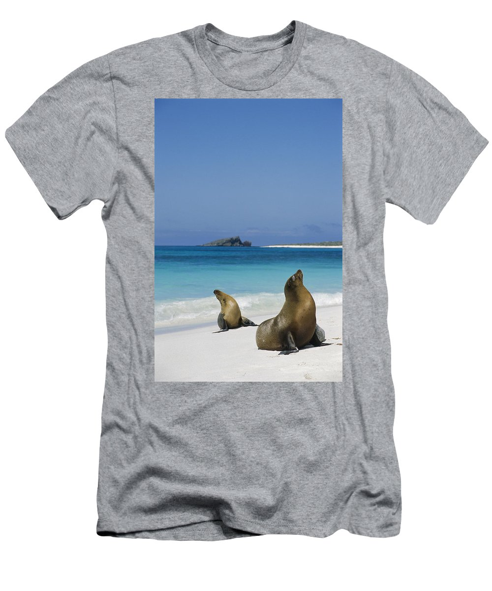 Feb0514 Men's T-Shirt (Athletic Fit) featuring the photograph Galapagos Sea Lions On Beach Galapagos by Tui De Roy