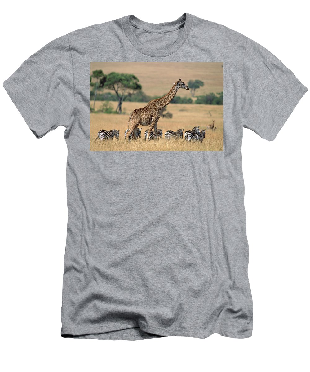 Ai Men's T-Shirt (Athletic Fit) featuring the photograph Giraffe Giraffa Camelopardalis by Ferrero Labat