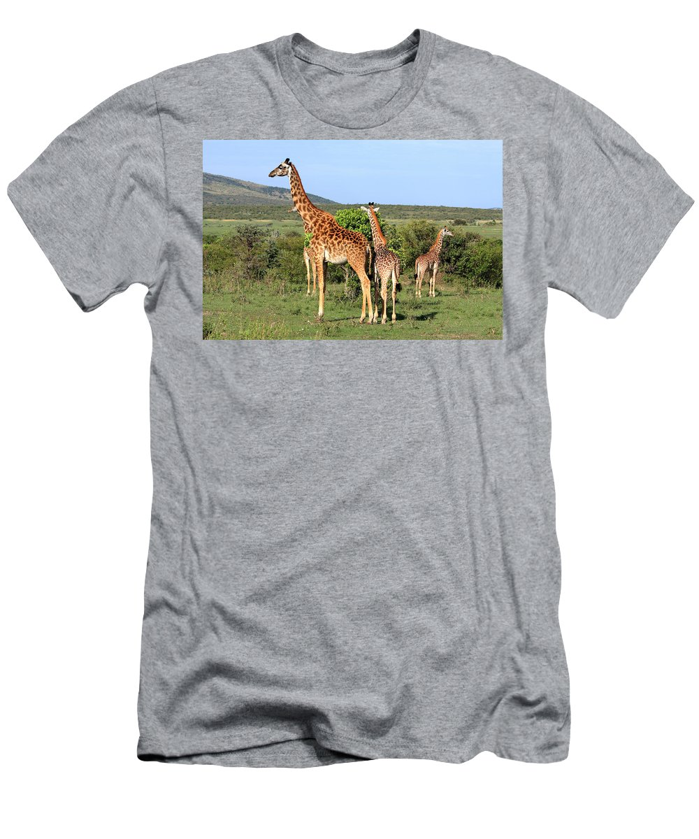 Africa Men's T-Shirt (Athletic Fit) featuring the photograph Giraffe Group On The Masai Mara by Aidan Moran