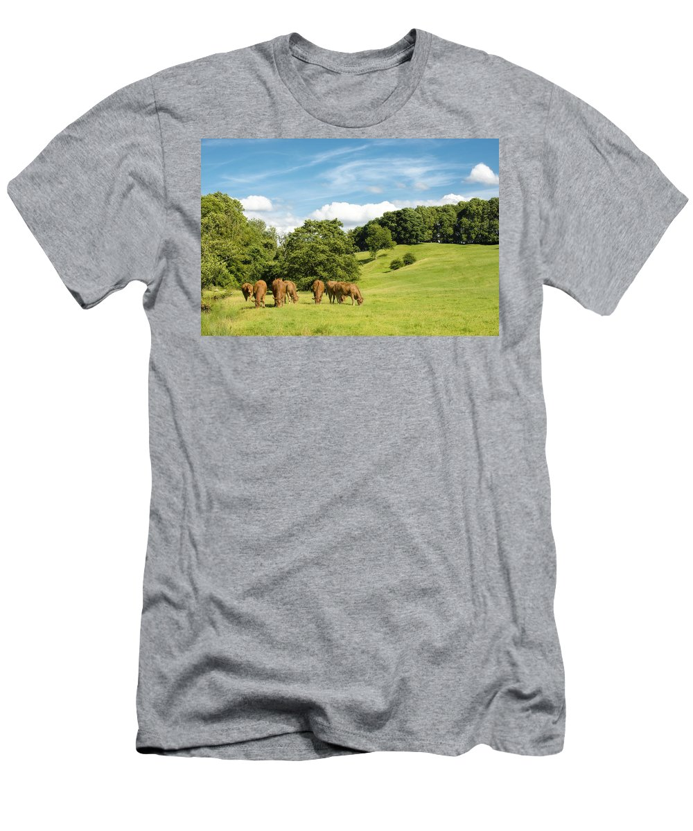 Grazing Men's T-Shirt (Athletic Fit) featuring the photograph Grazing Summer Cows by Amanda Elwell