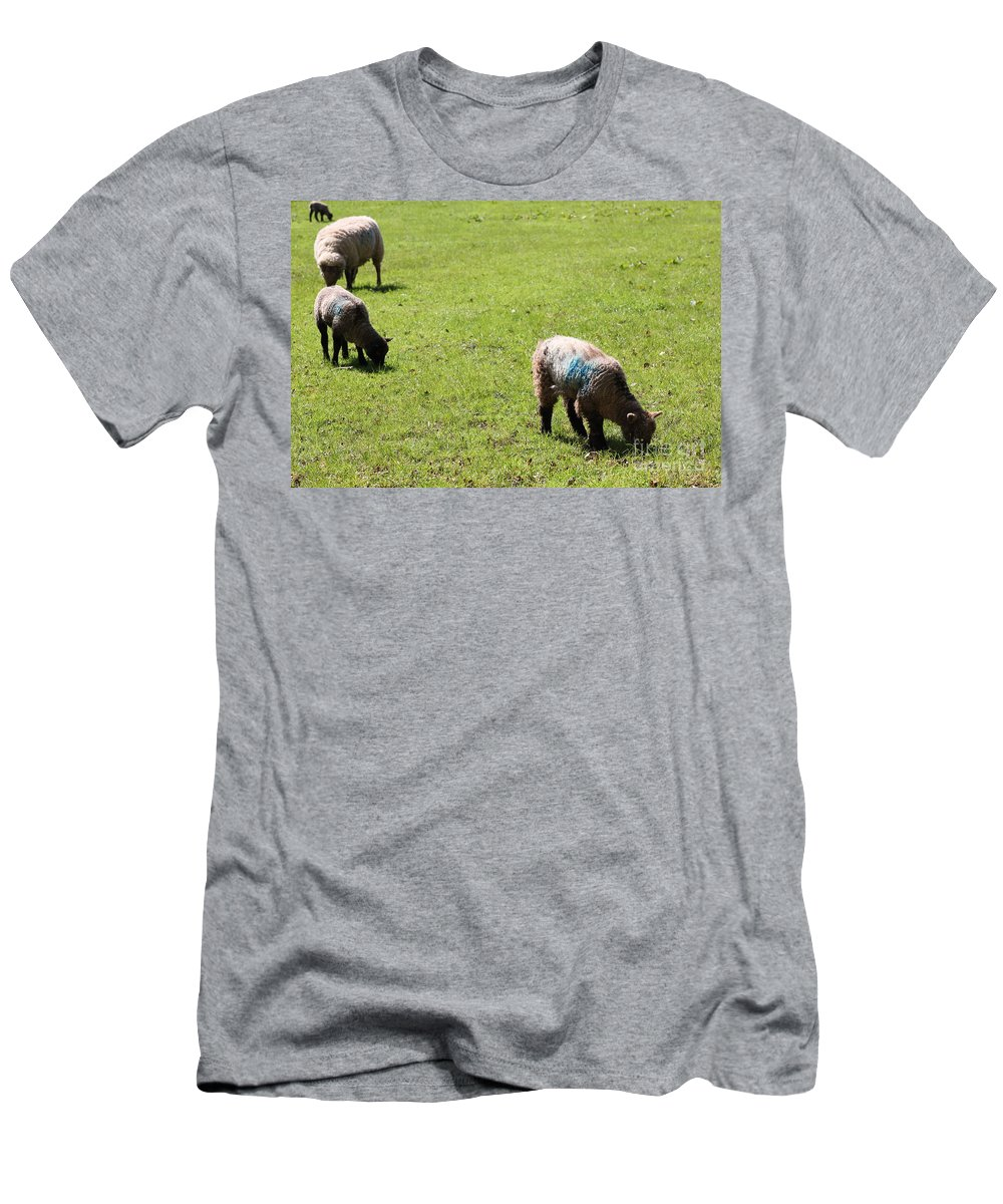 Field Men's T-Shirt (Athletic Fit) featuring the photograph Grazing by Vicki Spindler