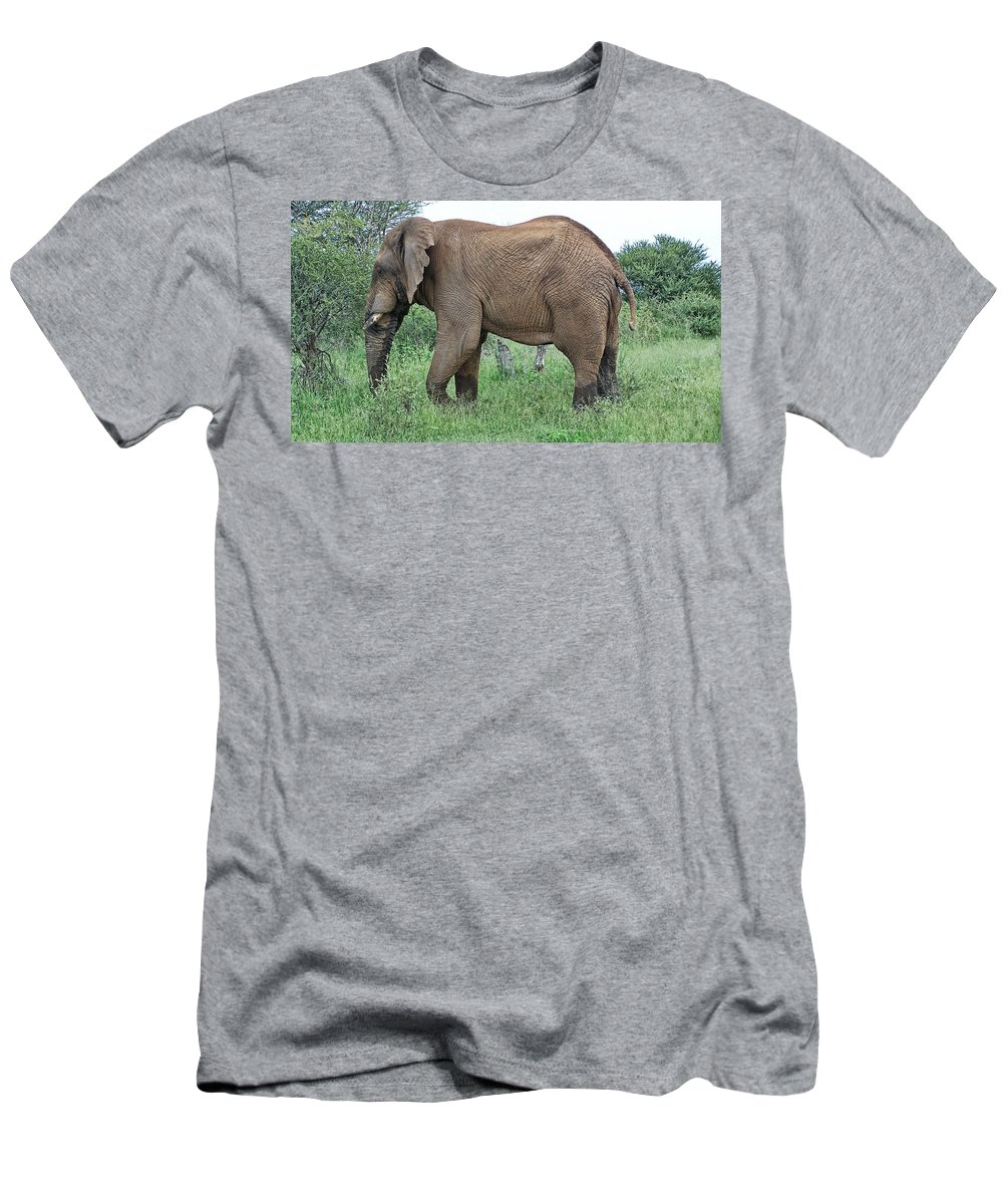Elephant Bull Men's T-Shirt (Athletic Fit) featuring the photograph Greener Pastures-after The Rains by Douglas Barnard