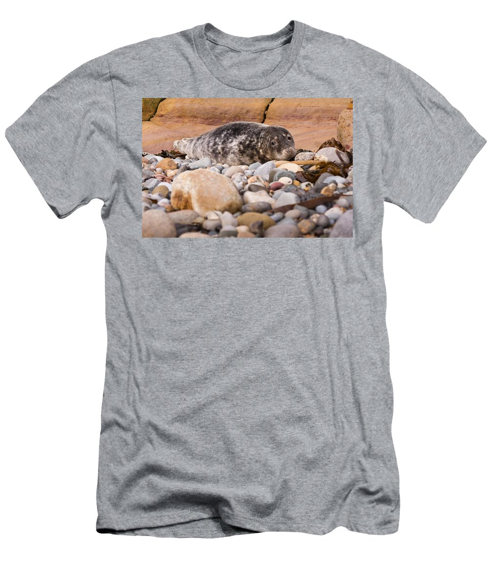 Animal Men's T-Shirt (Athletic Fit) featuring the photograph Harbour Seal  by David Head