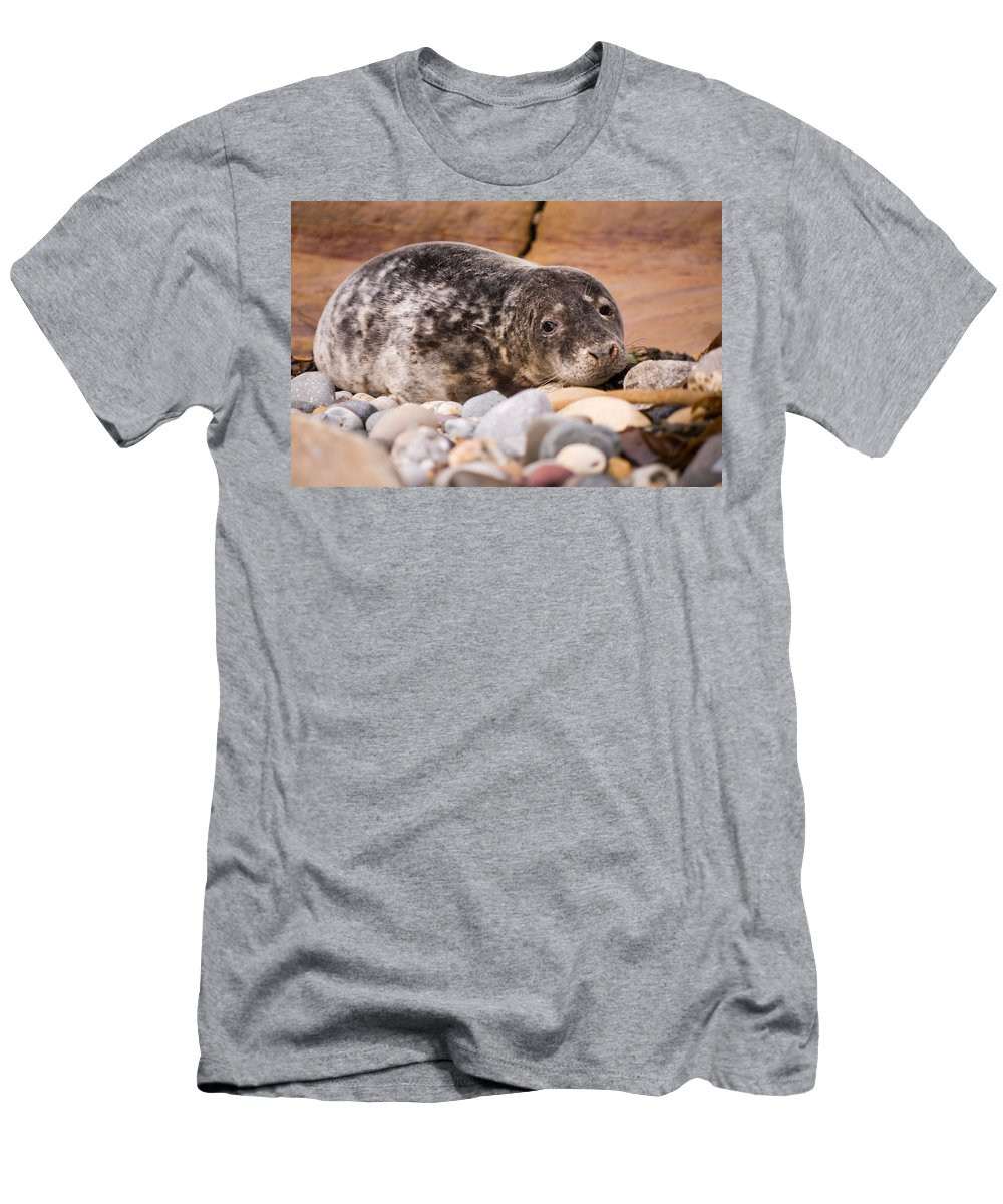 Animal Men's T-Shirt (Athletic Fit) featuring the photograph Harbour Seal Close Up by David Head
