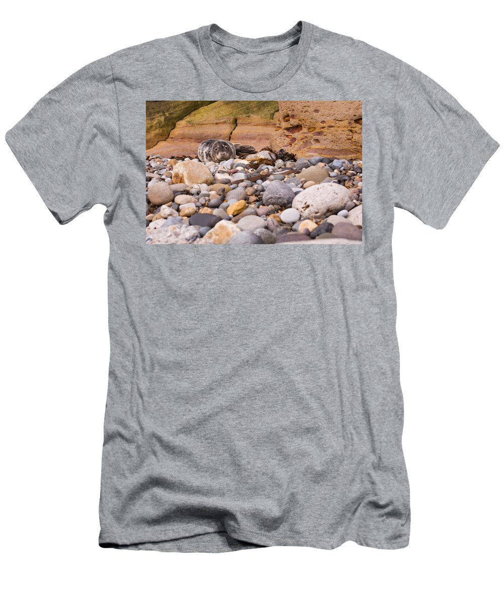 Animal Men's T-Shirt (Athletic Fit) featuring the photograph Harbour Seal On Pebble Beach by David Head