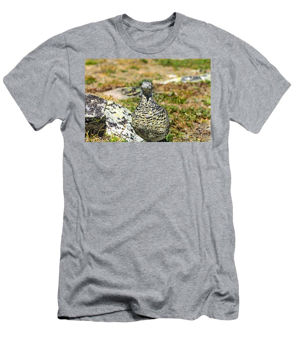 Hen Men's T-Shirt (Athletic Fit) featuring the photograph Partridge 3 by Viktor Birkus