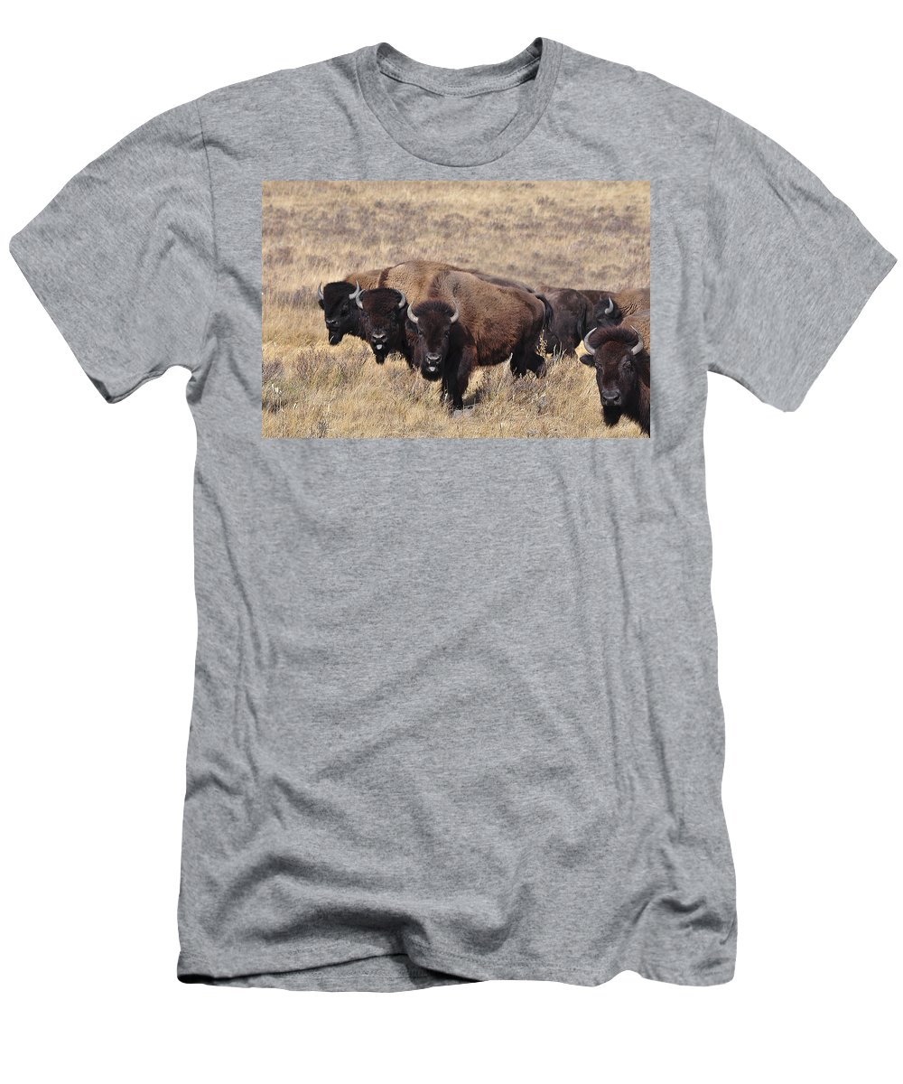 Buffalo Men's T-Shirt (Athletic Fit) featuring the photograph Home On The Range by Fran Riley
