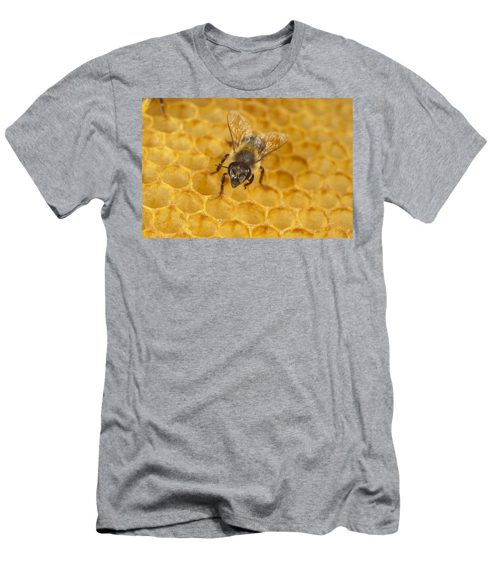 Feb0514 Men's T-Shirt (Athletic Fit) featuring the photograph Honey Bee Colony On Honeycomb by Konrad Wothe