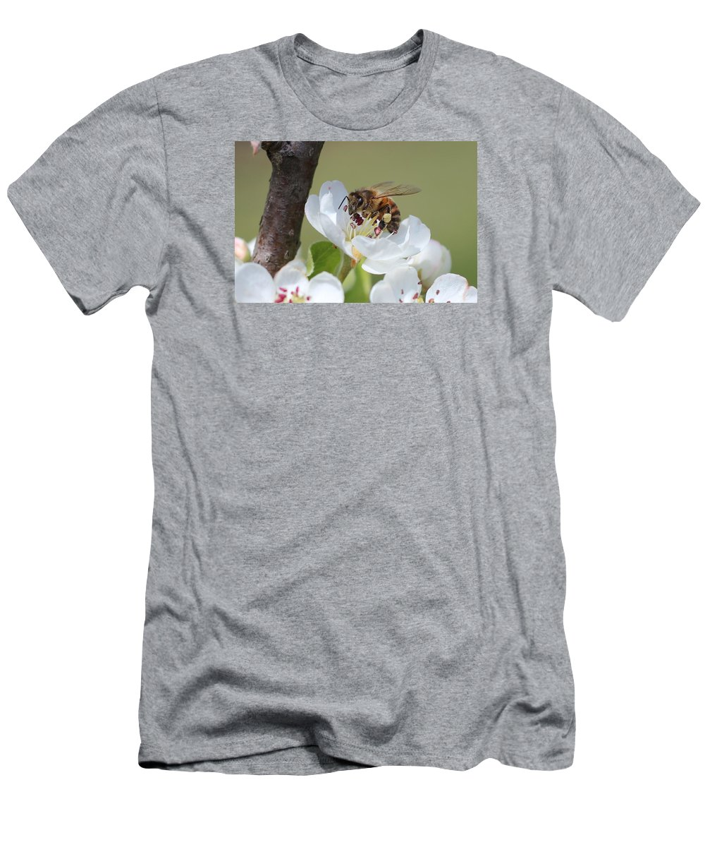 Honeybee Men's T-Shirt (Athletic Fit) featuring the photograph Honeybee On Apple Blossom by Lucinda VanVleck