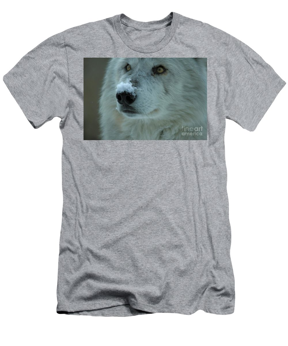 Alpha Wolf Men's T-Shirt (Athletic Fit) featuring the photograph Hopeful Gaze by Adam Jewell