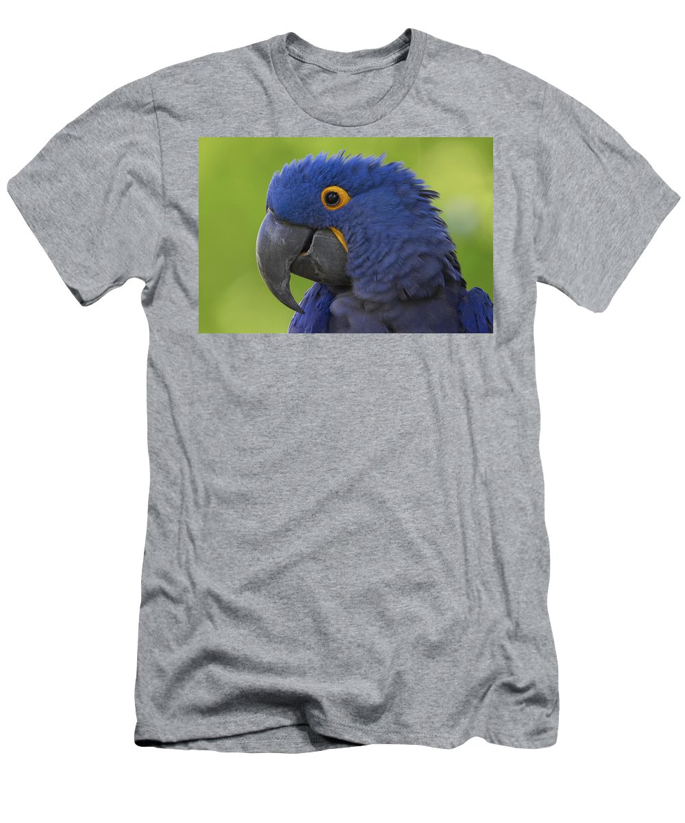 Feb0514 Men's T-Shirt (Athletic Fit) featuring the photograph Hyacinth Macaw Portrait by San Diego Zoo