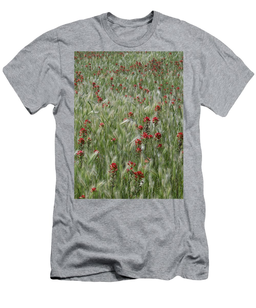 Feb0514 Men's T-Shirt (Athletic Fit) featuring the photograph Indian Paintbrush And Foxtail Barley by Tim Fitzharris