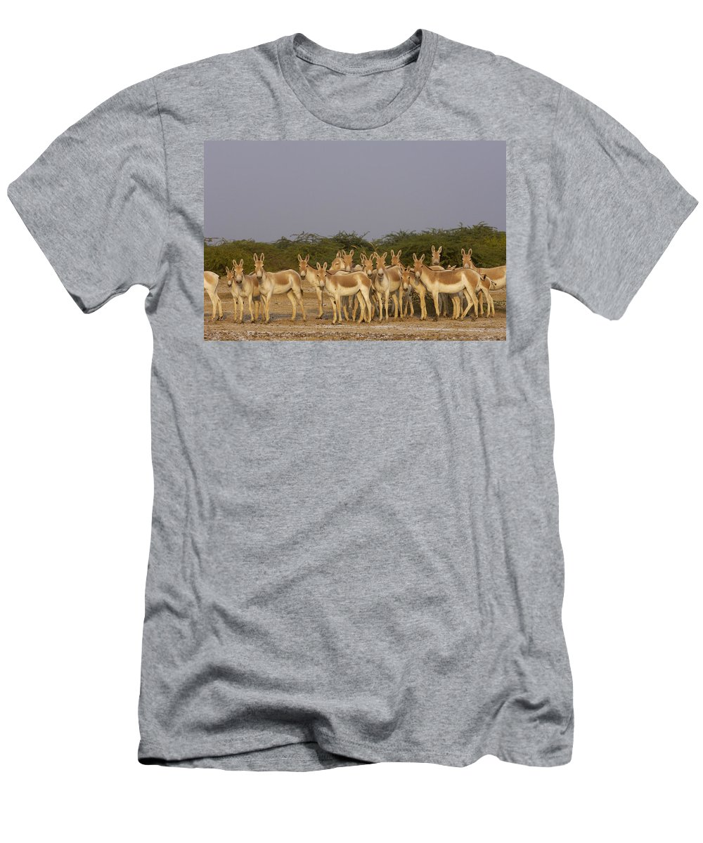 Feb0514 Men's T-Shirt (Athletic Fit) featuring the photograph Indian Wild Ass Herd Gujarat India by Pete Oxford