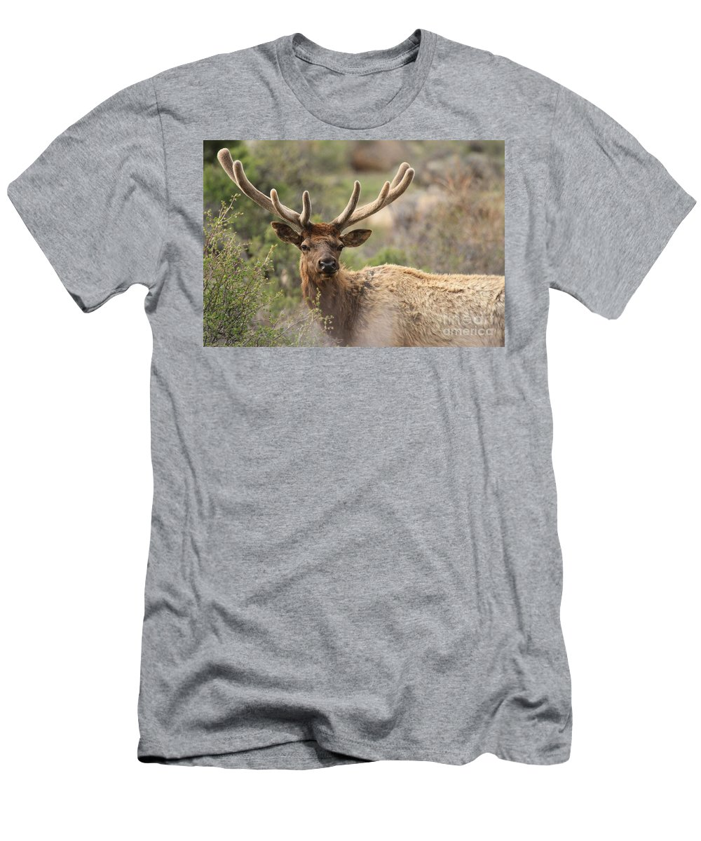 Rocky Mountain National Park Men's T-Shirt (Athletic Fit) featuring the photograph Junior Rack by Adam Jewell