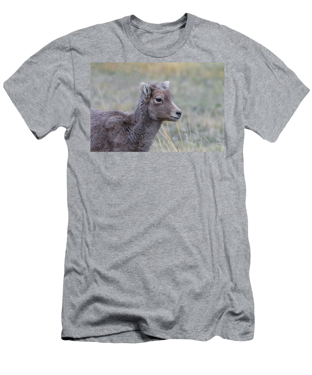 Rocky Mountain Bighorn Sheep Men's T-Shirt (Athletic Fit) featuring the photograph Just Waitin by Rich Franco