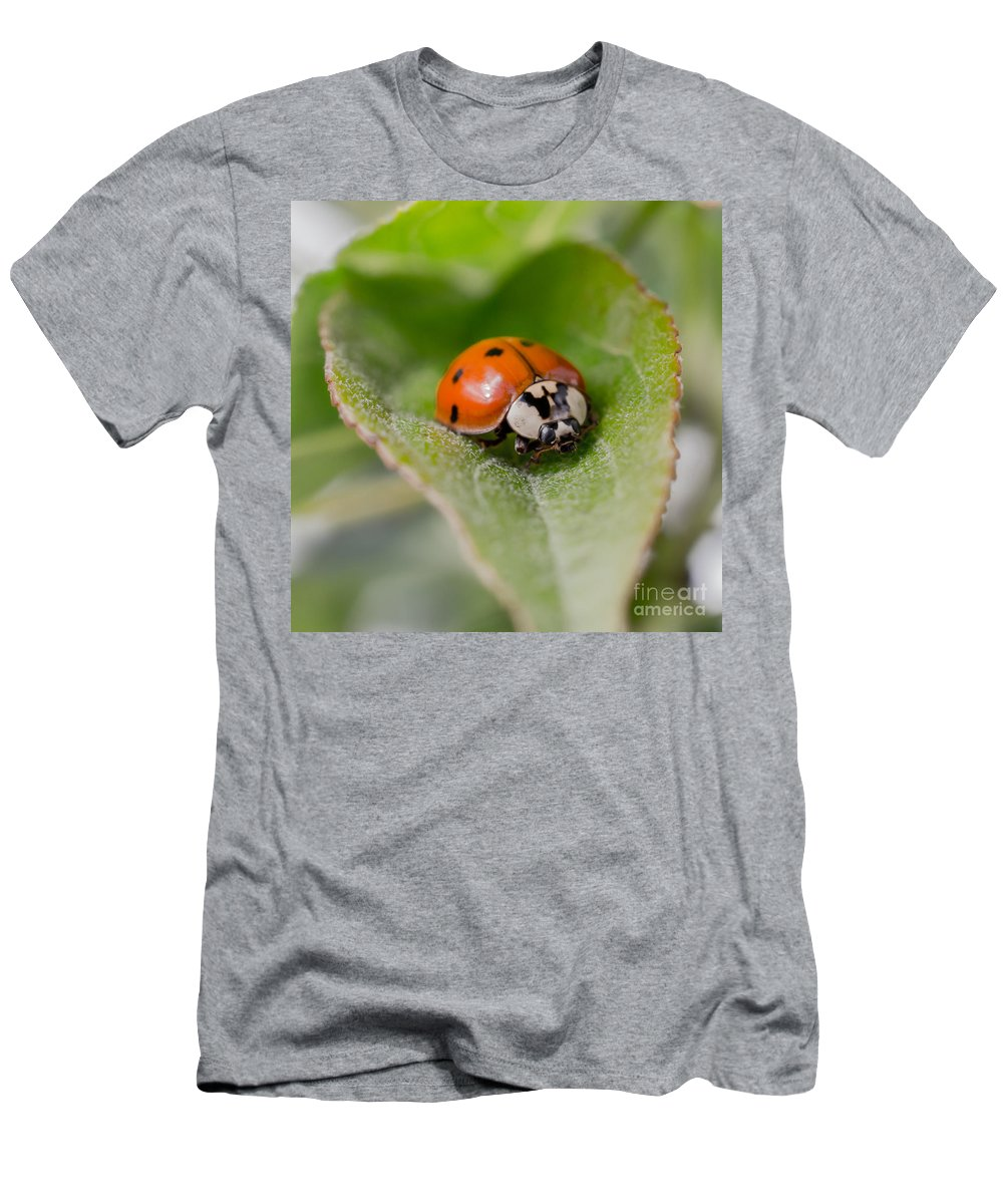 Art Men's T-Shirt (Athletic Fit) featuring the photograph Ladybug by Lucid Mood
