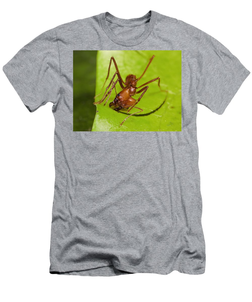 Feb0514 Men's T-Shirt (Athletic Fit) featuring the photograph Leafcutter Ant Cutting Leaf Costa Rica by Konrad Wothe