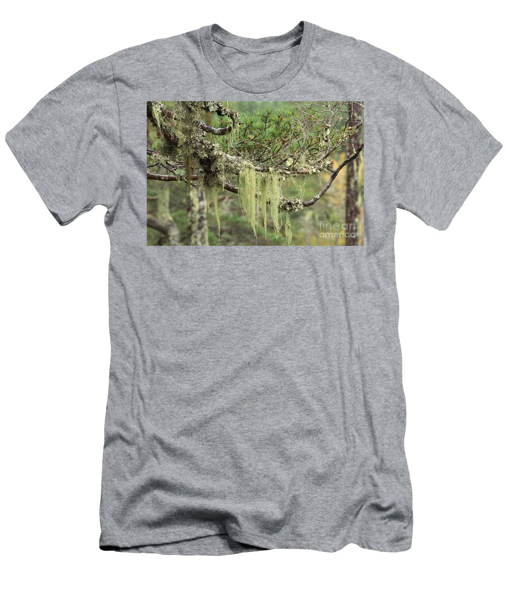 Lichen Men's T-Shirt (Athletic Fit) featuring the photograph Lichens On Tree Branches In The Scottish Highlands by Louise Heusinkveld