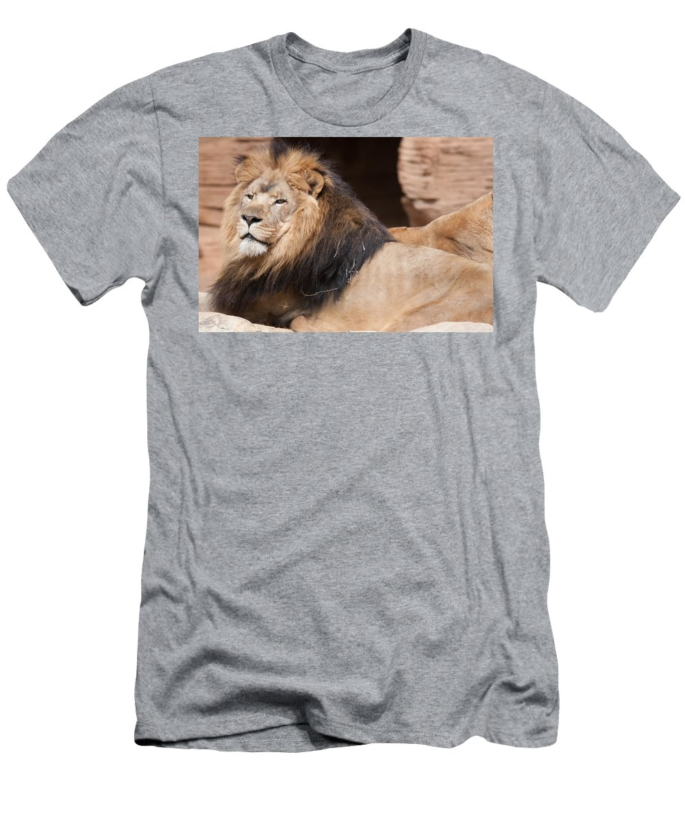 Lion Men's T-Shirt (Athletic Fit) featuring the photograph Lion Portrait Of The King Of Beasts by Alex Grichenko