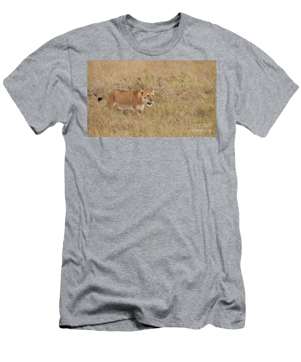Africa Men's T-Shirt (Athletic Fit) featuring the photograph Lioness, Kenya by John Shaw