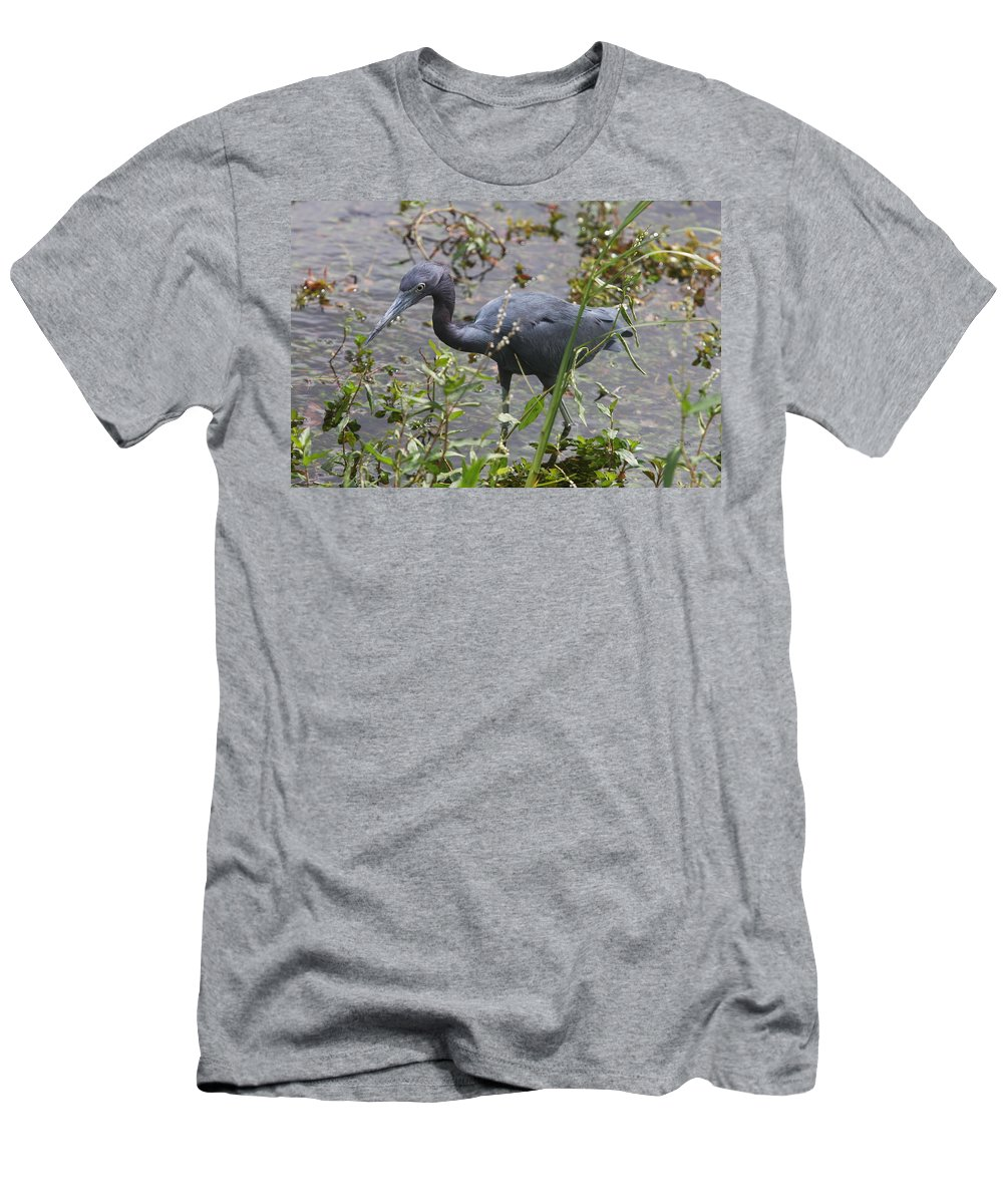 Heron Men's T-Shirt (Athletic Fit) featuring the photograph Little Blue Heron - Waiting For Prey by Christiane Schulze Art And Photography
