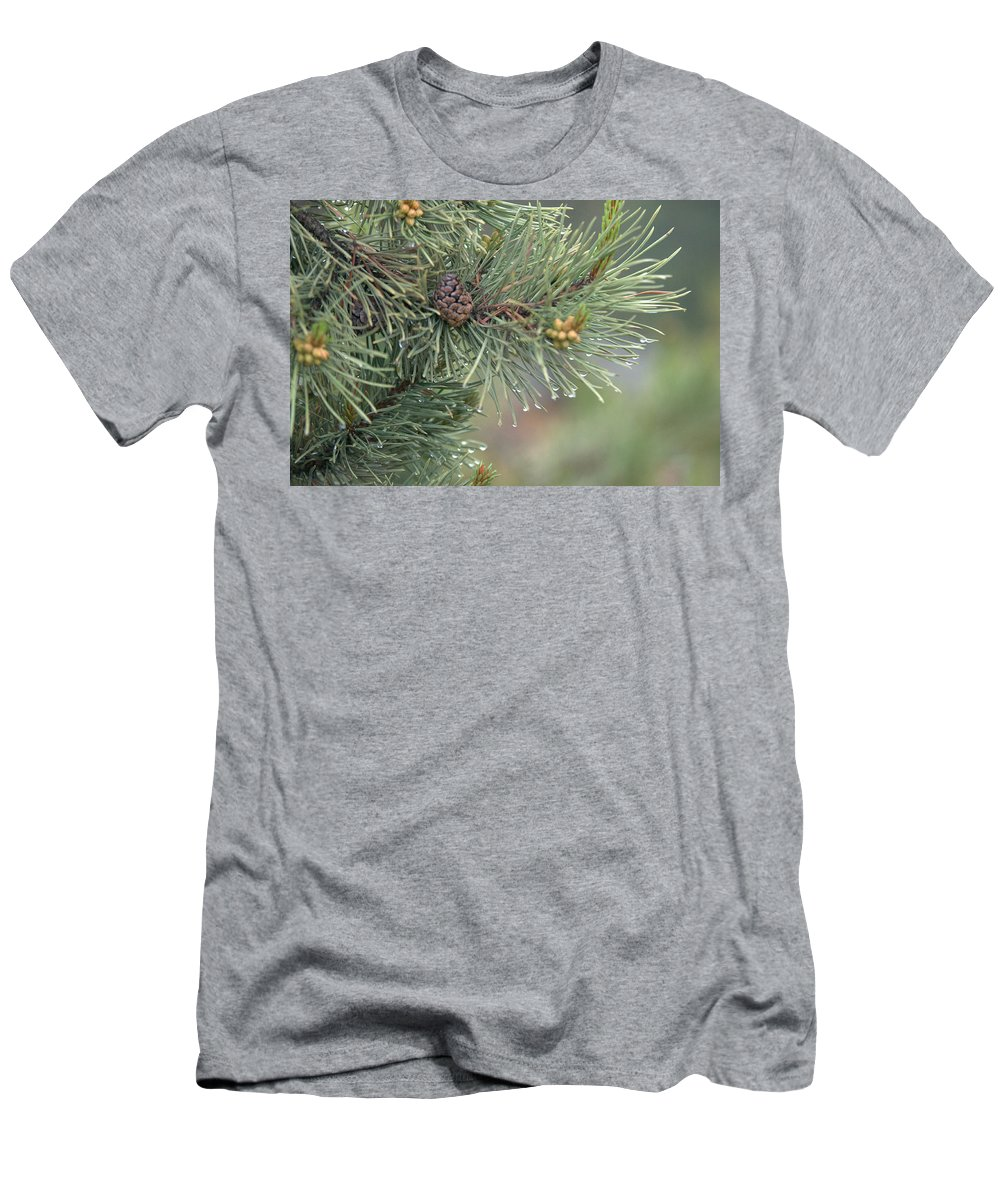 Pine T-Shirt featuring the photograph Lodge Pole Pine in the Fog by Frank Madia