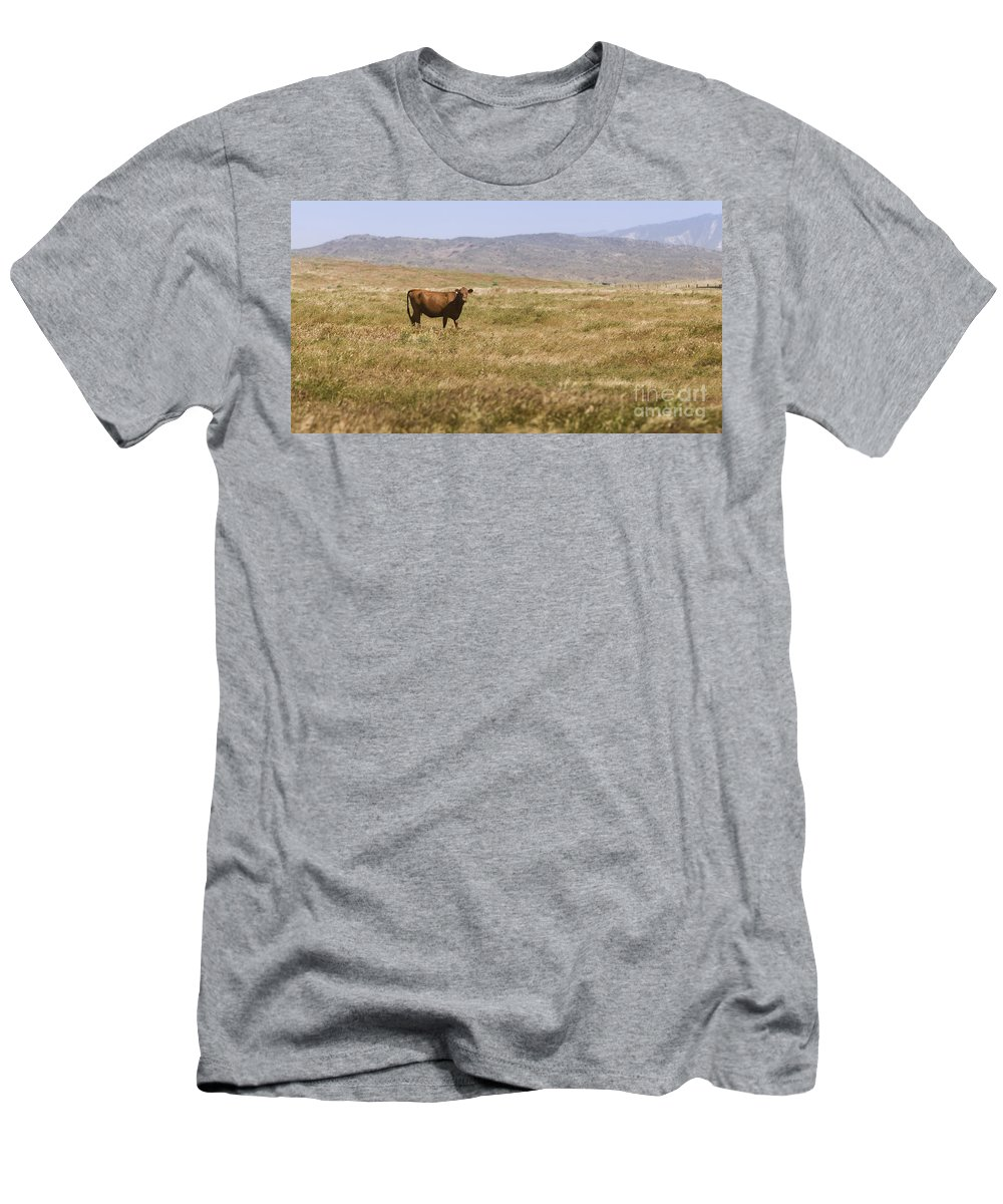 Free Men's T-Shirt (Athletic Fit) featuring the photograph Lone Cow In Grassy Field by B Christopher