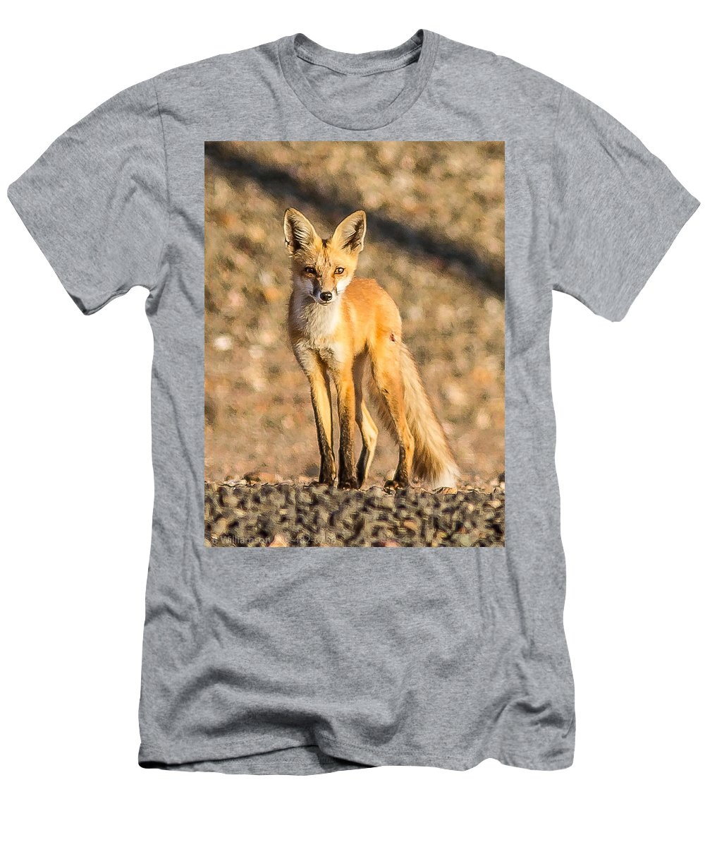 Red Fox Nature Outdoors Wildlife Men's T-Shirt (Athletic Fit) featuring the photograph Lone Fox by Brian Williamson